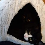 A photo sent in by one of our readers of their lovely rescue cats