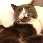 Bertie was an un-chipped stray who invited himself into his new family,s garden one day - and decided to stay!