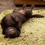Bonnie was rescued from the Dogs Trust in 2015, and despite having some trust issues she is clearly loving life now.