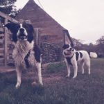 Skippy and Charlie were both rescued as older dogs - Charlie had been in kennels for 7 years in Romania before being brought to the UK by Furever Friends. Skippy was given up by his previous owner and spent a year in kennels before finding his forever home. It looks like these boys landed on their feet!