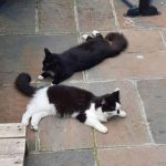 Dexter and Scamp live with Ivy and were adopted from Leeds Cat Rescue.