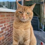 Forrest was adopted as a kitten, directly from someone who couldn,t give him the care he needed - he lives with 2 dogs now and reckons he is in charge!