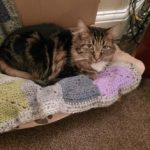 Ivy is a gorgeous tabby cat, 3 years old and was rescued from RSPCA Goole
