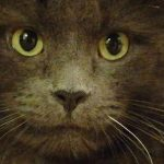 Mowgli was a feral cat rescued from Caring for Cats - look at those beautiful eyes!