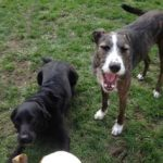Dexter and Bailey were both rescued