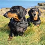 Oscar and Bruno were rescued 3 years ago - small boys with big personalities!