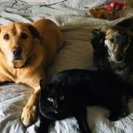 Ozzy the lab from RSPCA, Hazell the cat from Band of Rescuers, and Mia is a mixed breed all the way from Romania, adopted from Balkan Underdogs. What a gorgeous trio!