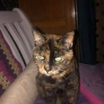 Pandora, rescued alongside her twin Doris from Leigh Animal Rescue in Greater Manchester ten years ago.